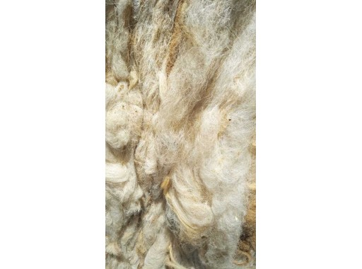 7-HLPL-64 - Raw Wool Sorted (White)