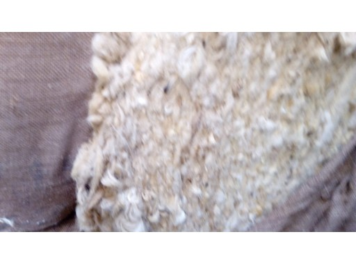 8-SFPL-66 - Yellow Raw Wool & White Raw Wool